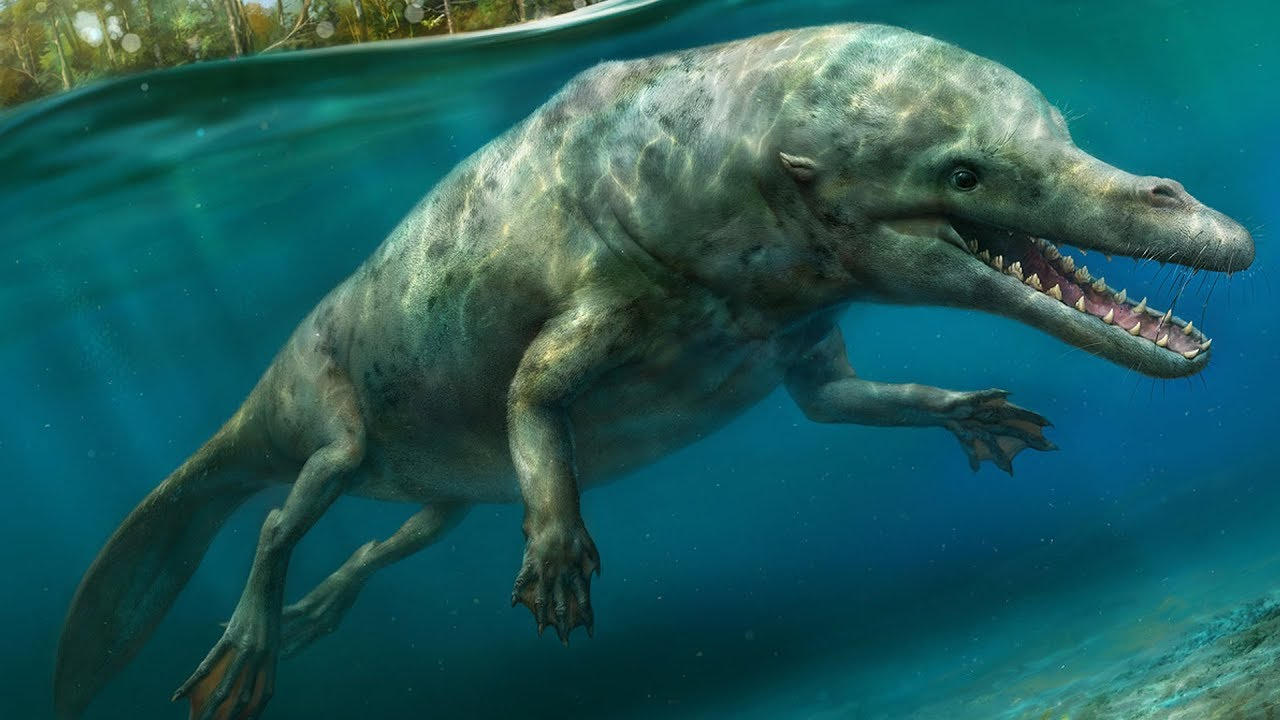The Evolutionary History of Whales - Cetacean Evolution ... - photo#15
