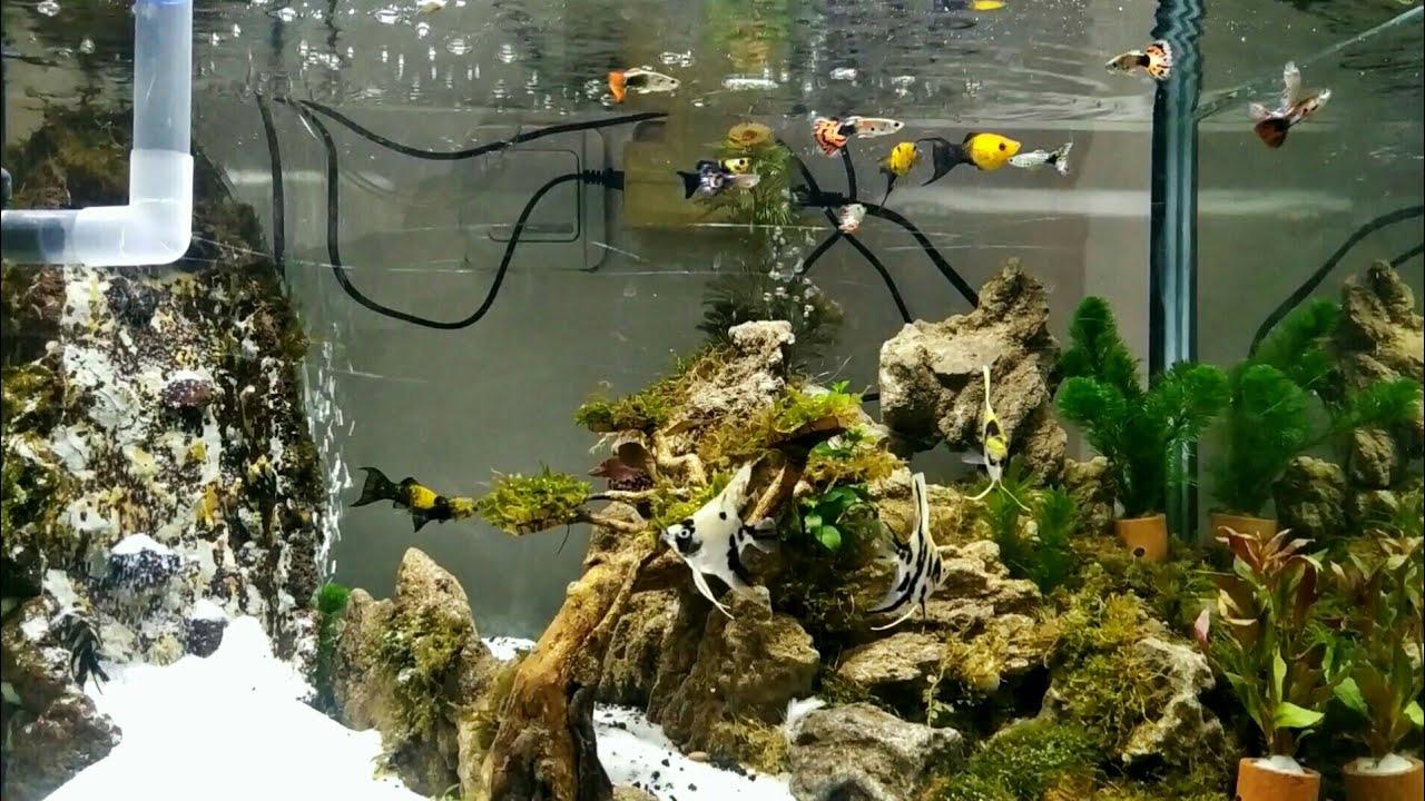 Aquascape Air Terjun Ikan Hias Kecil Aquarium Jernih Youtube Hiasan akuarium air tawar