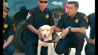 Andro, Si Anjing Pelacak Pengungkap Sabu
