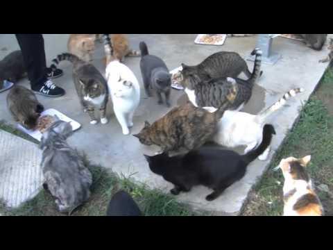 CESENA: Commissariato il gattile dell'Enpa- VIDEO
