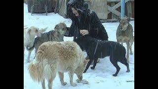 Волонтёры Фонда защиты бездомных животных рассказали о своей работе