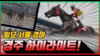 [일요 경마] 21년 3월 14일 서울경주 하이라이트