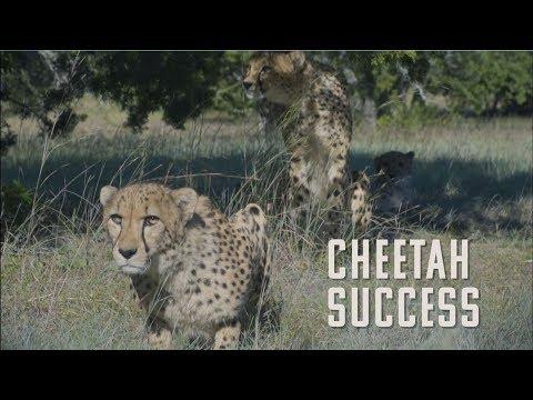 Cheetah Challenge Finale | Fossil Rim Wildlife Center