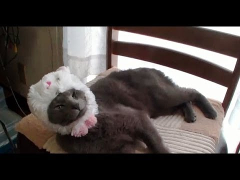 Videos chistosos de Gatos graciosos Compilacion 2014 - Funny Cats