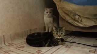 Кот пристаёт =)