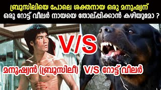 Man (Bruce Lee) V/S Rottweiler Dog | Who would win?  Can Bruce lee defeat a Rott?  ബ്രൂസ് ലീ