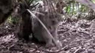CANADIAN LYNX Home Improvements - Big Cat TV