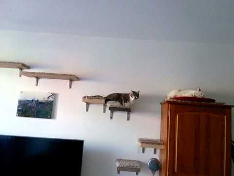 bandit et crevette sur leur arbre chat mural youtube. Black Bedroom Furniture Sets. Home Design Ideas
