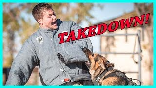 Getting Attacked By Police Dogs
