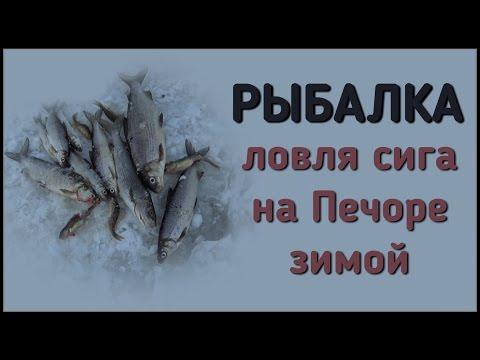 все для ловли сига зимой на реке