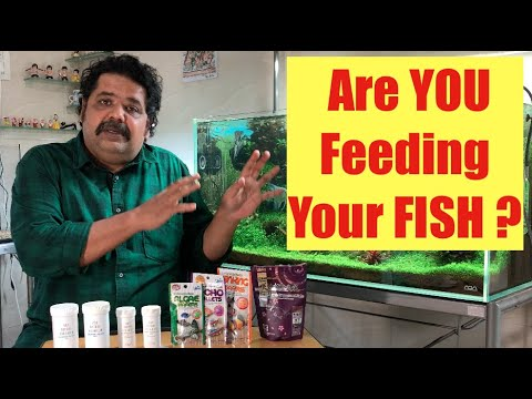 What Are You Feeding Your Fish? | How Much & How To Feed Fish? | Aquarium Care | Best Goldfish Food