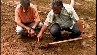 Gambar cover Solarização do solo