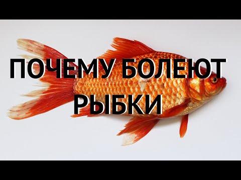 Чем болеют рыбы в аквариуме