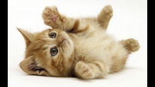 VLOG Поход в зоомагазин. Милые котята. Хочу котёнка! Папа не покупает котёнка