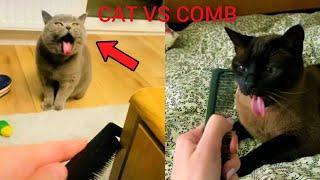 Cat vs Comb - Comb Sound Cat Reaction   Funny Cats Reaction #46