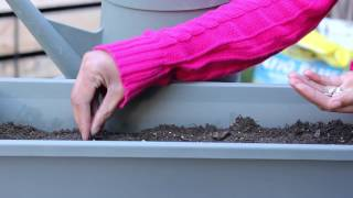 How to Garden With Sunflower Seeds : Planting the Seed