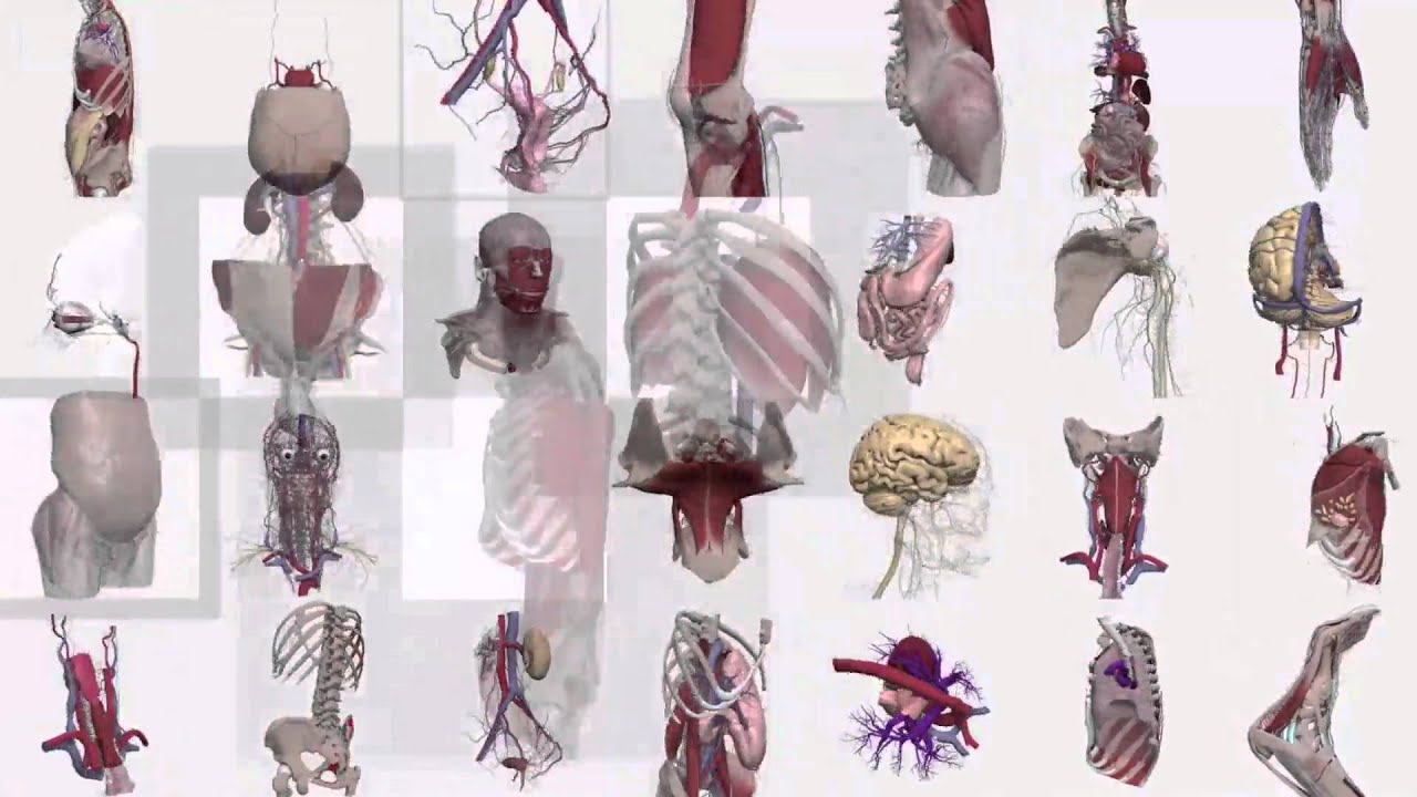 Primal Pictures 3D Real-time Human Anatomy in Chinese - YouTube