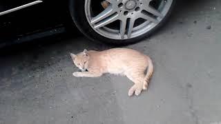 Кошка на прогулке...