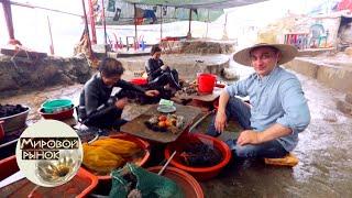 Южная Корея. Пусан. Рынок Чагальчи 🍅 Мировой рынок 🌏 Моя Планета