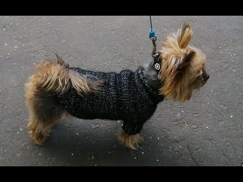 Вопрос: У каких пород собак обхват шеи 30 сантиметров?