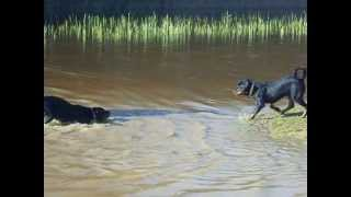 Rottweiler Puppies Indiana + Harvey