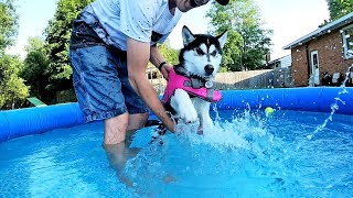 Kira the Husky Puppy Learning to Swim