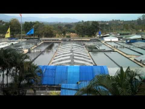 Commercial Spirulina Algae Farm in Thailand