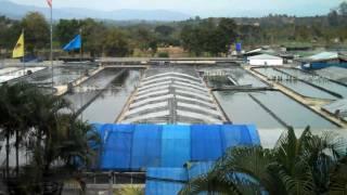 Commercial Spirulina Algae Farm in Thailand