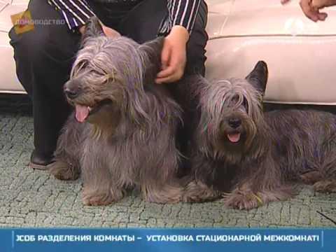 Небесные собаки