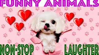 ❤️ Funny animals never fail to make us laugh. Super cute dogs, cats and puppies - How not to laugh