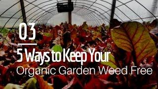 5 Ways to Keep Your Organic Garden Virtually Weed Free
