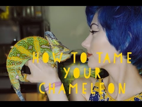 HOW TO TAME YOUR CHAMELEON