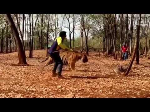 Manyam Puli Making Video   Peter Hein With Tiger Vietnam Location Video