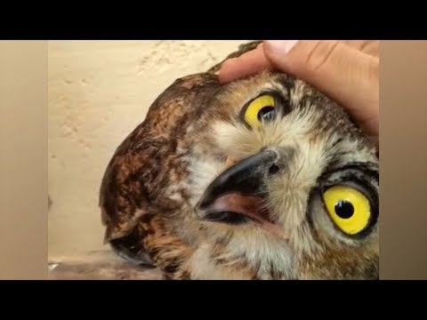 OWLS - So Cute They'll Make You Smile Instantly! | Cute & Funny Owls Video
