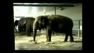 Ringling Bros Circus Elephant Show - Ringling Bros and Barnum and Bailey DOCUMENTARY