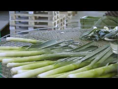 Betriebsvideo Gemüse Käser & Co. (Schweizerdeutsch)