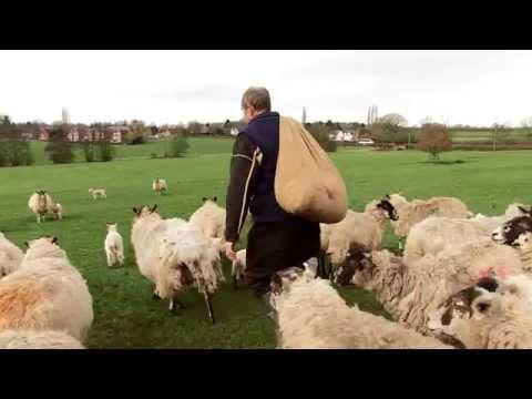 Roast Lamb Dinner: It's Time to Back British Farming
