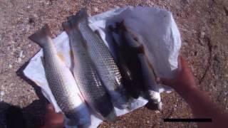 Рыбалка в Крыму на пиленгаса(, 2016-06-19T15:20:46.000Z)