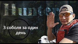 Охота на соболя в Якутии/ 3 соболя за день.//3 sable.