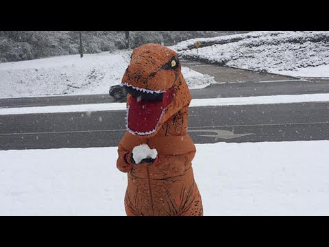 T. Rex Tries to Throw a Snowball as Winter Weather Strikes Alabama