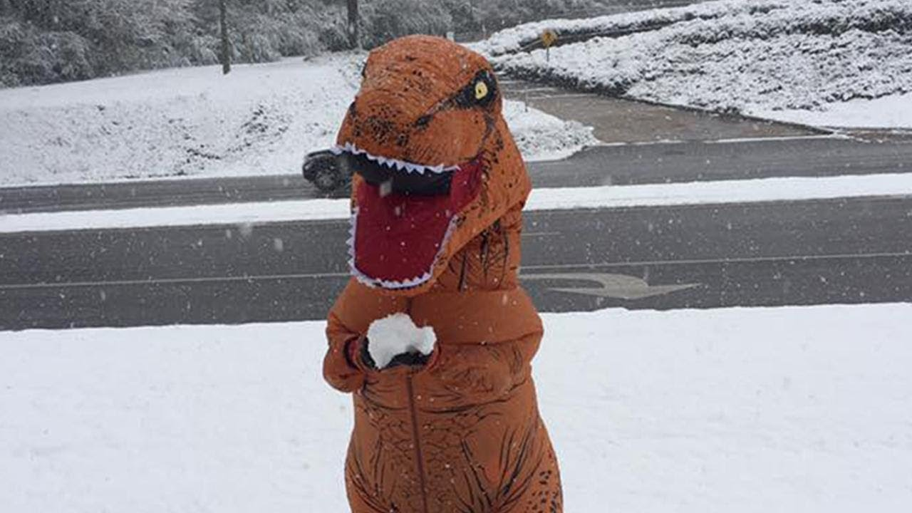 t-rex-tries-to-throw-a-snowball-as-winter-weather-strikes-alabama
