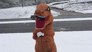 T. Rex Tries to Throw a Snowball as Win...
