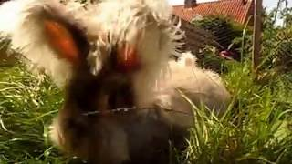 Как живут мои кролики летом
