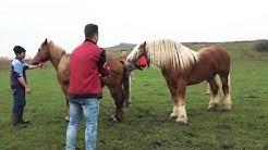 Horse matting animals matting breeding  American zoos beautiful wildlife_2020 hd