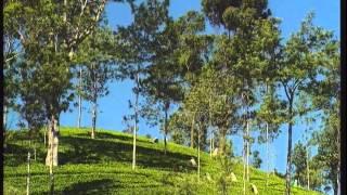 Teefilm SCHATZ DER ERDE - Der Teeanbau