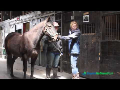 Pal-O-Mine Equestrian