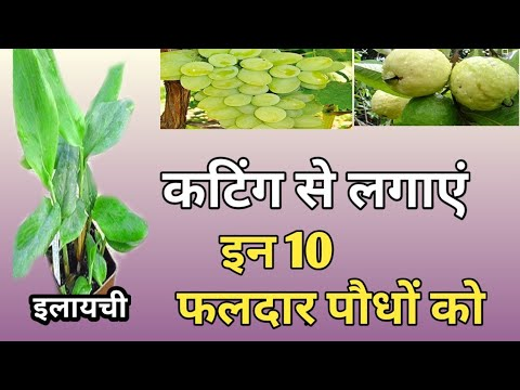 15 Fruit Crops to Propagate for Free from Cuttings inHindi
