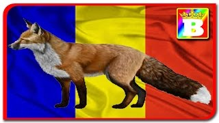 VLOG  Animale salbatice din Republica Moldova  Bogdan`s Show