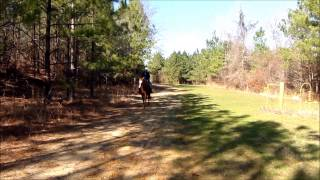 Horseback Ride In The Woods
