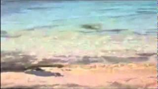 В Австралии стафф покусал акулу..mp4(, 2011-10-23T06:27:23.000Z)
